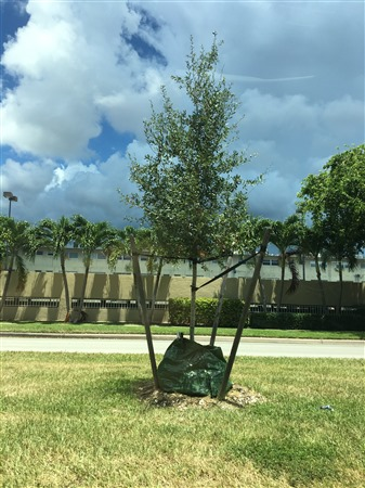 Community Tree Plantings – District 2