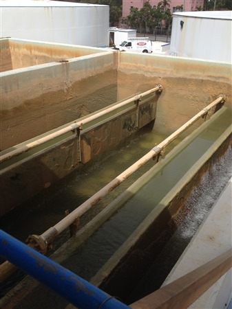 Water Plant Filter Replacement