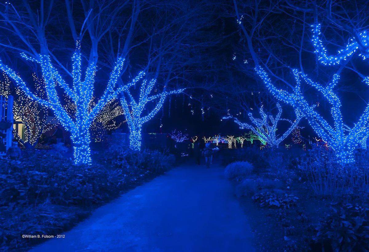 Lights at Meadowlark Botanical Gardens